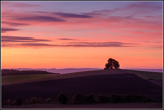 Before the Day Starts (littlenorty) Tags: brightwellbarrow colour england europe landscape longwitenham nature oxfordshire pink red sunrise tree type unitedkingdom wittenhamclumps goldenhour fujixt2 fuji 50140 f28 lens