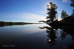 Memories of Lake Nipissing - P9250019 (2) (pamelabeale) Tags: sunrise lake lakenipissing morning ontario canada lavigne blue calm tree reflection fisheye olympusomdem5