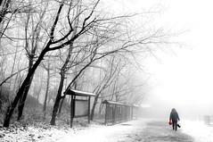 Home going (MelindaChan ^..^) Tags: china park people white snow tree unesco mel melinda hunan zhangjiajie geological 湖南 張家界 wulingyuan 地質公園 天子山 武陵源 chanmelmel melindachan 張家界世界地質公園 zhangjiajieworldgeologicalpark