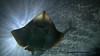 Rediculously photogenic ray (Hammerdproductions) Tags: fish beautiful smile animals amazing stingray good feel imagine productions photogenic happyness ridiculously hammerd