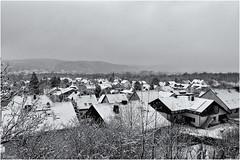 snow attack_2013 (AngieD.) Tags: schnee bw snow blackwhite attack rheinland scheuren angriff 2013 silverefex