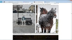 AAHHH!! My picture made it onto Daily mail! :D (Jasmine'sCamera) Tags: horse snow happy mail daily thrilled