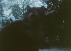 Box Tengor Winter (-masru-) Tags: film tiere lab scan katze rollfilm mausi fujicolorpro400h 120rollfilm lenstagger oberheinriet