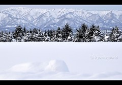 Snowscape (Ryota's world) Tags: travel winter cloud mountain snow tree nature japan nikon scenery hokkaido bokeh tamron snowscape snowscene northernmost nikond90 tamron18270