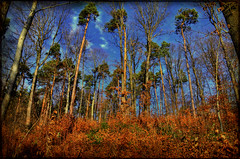 In the woods (FocusPocus Photography) Tags: trees winter forest germany deutschland woods arboles stuttgart bluesky bosque wald bume blauerhimmel fort abres rotenberg badenwuerttemberg