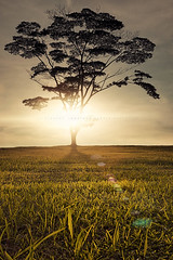 Dis appear (draken413o) Tags: sunset sky tree focus singapore stack punggol flare lone waterway