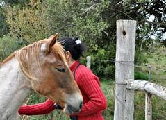 Amemos by Ana Isabel (Eliana Lcio) Tags: horse caballo cavalo claudiorizzih