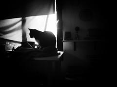 (Daniel Ivn) Tags: light blackandwhite cats blancoynegro silhouette cat blackwhite gatos gato silueta blackwhitephotography blackwhitephoto blackwhitephotos backlightning fotografablancoynegro bestofbw danielivan thecatwhoturnedonandoff danielivn