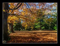 Autumn Leaves (Travels with a dog and a Camera :)) Tags: uk november autumn trees england house southwest west fall leaves digital photoshop woodland bristol dc pentax nt south sigma national trust 1020mm nationaltrust 43 2012 lightroom k7 tyntesfield cs6 1456 tyntesfieldhouse justpentax sigma1020mm1456dc pentaxk7 photoshopcs6 lightroom43