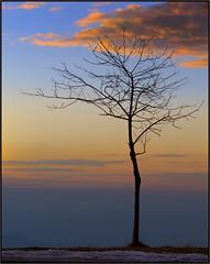 Piazzale Bielmonte (beppeverge) Tags: sunset tramonto albero bielmonte oasizegna fav10 panoramicazegna beppeverge