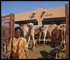 Camels (Indianature21) Tags: uae dromedary camel february alain camels camelmarket camelfarm 2013  indianature alaincamelmarket alaincamelfarm camelfarmalain