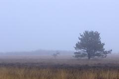 Bargerveen (Ernst-Jan de Vries) Tags: mist tree fog canon foggy boom drenthe bargerveen zwartemeer ernstjandevries