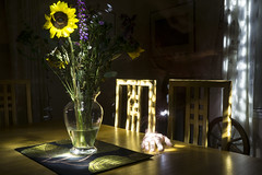 DC3257  DSC02958NX5N Sunflower © 2013 Paul Light (Paul Light) Tags: diningroom sunflower nightwork nightinterior