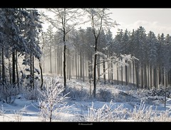 Winter moment (on explore) (bernd obervossbeck) Tags: schnee winter snow fog forest landscape landschaft wald dunst sauerland landscapephotography hochsauerland niedersfeld landschaftsfotografie canoneos60d rememberthatmomentlevel1