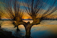 The Willow Man (unciepaul) Tags: sunset man tree willow hdr 2470mm nikond800