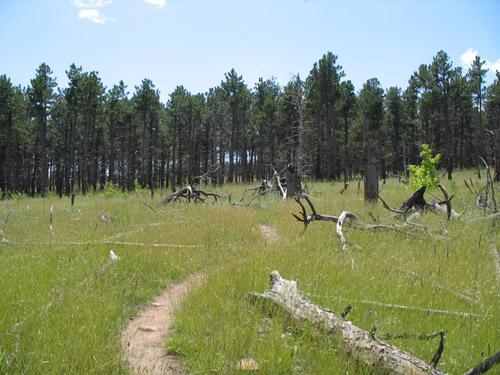 Photo - The beginning of the Goshawk Ridge Trail