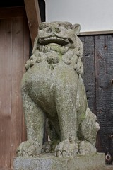 Ryuufuku Shrine 14 (KyotoDreamTrips) Tags: japan kyoto ume plumblossomfestival   aodanibairin joyocity munenagashinno nakatenmanjinja ryuufukushrine