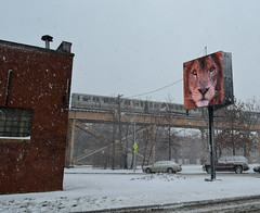 (GXM.) Tags: winter snow chicago cta lion el advertisement bucktown gxm 2013