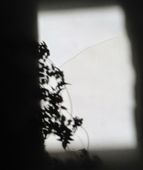 (Amber-Thomas) Tags: light shadow plant