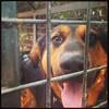 Stupid HERO i love him #dog #dog #puppy #pup #TagsForLikes #cute #eyes #instagood #dogs_of_instagram #pet #pets #animal #animals #petstagram #petsagram #dogsitting #photooftheday #dogsofinstagram #ilovemydog #instagramdogs #nature #dogstagram #dogoftheday