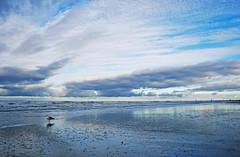 Nordstrand | Norderney (_dankhn) Tags: sky bird beach nature clouds strand reflections landscape island sand meer mood seagull natur perspective himmel wolken atmosphere norderney insel northsea ostfriesland möwe landschaft nordsee atmosphäre cloudporn stimmung perspektive niedersachsen lowersaxony reflektionen ostfriesischeinseln germansea