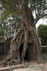Angkor Wat Jungle (Elena Martinello) Tags: trip travel tree temple asia cambodia roots angkorwat jungle getty viaggio tempio cambogia giungla gettyimagesitalyq1 gettyimagesitalyq2 gettyimagesitalyq3