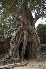 Angkor Wat Jungle (Elena Martinello) Tags: trip travel tree temple asia cambodia roots angkorwat jungle getty viaggio tempio cambogia giungla gettyimagesitalyq1 gettyimagesitalyq2 gettyimagesitalyq3