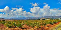 My Little Paradise - Deir el Ahmar - Lebanon (Hanna Khoury) Tags: blue sky lebanon cloud green landscape peace vine el nuage paysage plain grape vigne ahmar fie liban cabernetsauvignon  cabernet sauvignon plaine deir  bekaa            grume