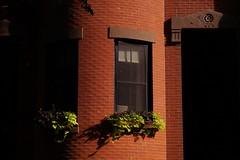 South End - Appleton Street (luco*) Tags: tatsunis damrique amrique united states america nouvelle angleterre new england massachusetts boston south end appleton street usa maison house