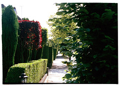 Garden pathway, aligned by hedges (Melanie Jayne Art) Tags: london engaland garden landscapes hedges red foilage pathway light photography film 35mm memory time archive