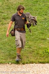 DSC_2325 (Pascal Gianoli) Tags: beauval bird oiseau zoo zooparc saintaignansurcher centrevaldeloire france fr pascal gianoli pascalgianoli