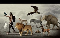 :: ANIMALS :: ( c) Tags: animals kaiserdesign lion photomanipulation design diseo art arte edicion editing
