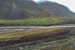 One of the greenest valleys in Svalbard IMG_1357 (grebberg) Tags: bjrndalselva hiking bjrndalen spitsbergen svalbard july 2016