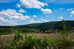 DSC_1443 (Marlon Fried) Tags: landschaft landscape field feld acker getreide cereals crops grain
