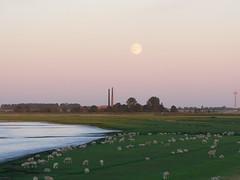 day and night depart (achatphoenix) Tags: dusk crpuscule dmmerung abend eastfrisia enroute ostfriesland sunset ems riverems sheep ziegelei cramer leding emsziegeleien