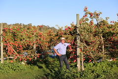 IMG_5933 (mavnjess) Tags: 28 may 2016 harvey edward giblett newton orchards manjimup harveygiblett newtonorchards cripps pink lady crippspinklady popaharv eating apple crunch crunchy biting apples pinklady pinkladyapple harv gibbo orchard appleorchard orchardist