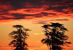Fire Sky (gfacegrace) Tags: simple simplicity calm beautiful skyporn orange pink pinksky sun sunlight clouds nature naturephotography sunsetphotography naturelovers natureshots love hope canvas skycanvas artistic light inspiration bold tree treephotography sunsetporn treesilhouette silhouette composition fire firesky burn glow