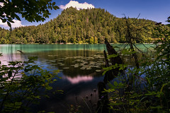 Alatsee (Ronny Gbler) Tags: see seerosen berge wasser reflektion spiegelung baum baumstamm wolken himmel