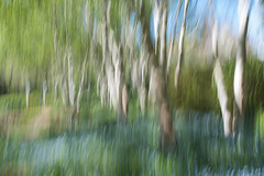 Spring Dream..... (glendamaree) Tags: panningshot surreal blur blurred nature nikon d750 slowshutter forgetmenot trees spring summer dream dreams dreamy intentionalcameramovement