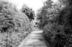 Walking the Path (MCorrigan1983) Tags: jch400 streetpan 2016 bw dunhammassey jchstreepan400 nikkor50mmf14ais nikonfe2