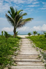 Path (SyrianH) Tags: path beach palm tree wooden ocean beaut beautiful