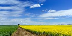 20160917 Clare Walley 01 (Alexander Kondakov) Tags: adelaide australia clarewalley landscape photobyalexanderkondakov sa sonyilcea7r