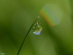 Morning Glow (ksenijaJ) Tags: autmn drop macro autumn