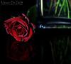 Flower (Nasser Bin Saud) Tags: flower canon 7d وردة ورد تصوير تصويري السعودية ورده ابداع canon7d