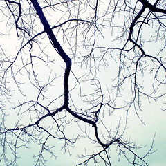 winter branches (uninvented colors) Tags: trees winter sky white black cold green nature square outdoor kentucky bare branches ashland mintgreen