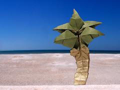 Coconut Tree (Quentin Trollip) (Danielle Verbeeten) Tags: art paper origami coconuttree papier quentin folding palmboom vouwen vouwkunst trollip
