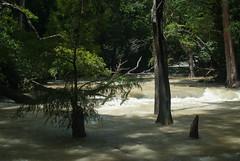 El Chiflón, Chiapas, Mexico (3905) (rooibusch) Tags: mexico cascades chiapas chiflón