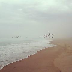 Scamander (Hueystar) Tags: ocean morning blue sea summer sky beach water smart birds mobile fog square coast flying sand phone australia east tasmania 4s iphone hipstamatic instagram