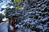 145 (Mayo Takamoto) Tags: winter snow kyoto 京都 冬 kibune kurama 貴船 鞍馬 kihune
