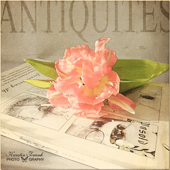 Vintage (Kerstin Frank art) Tags: texture action tulip magazin coffeeshopaction kimklassen